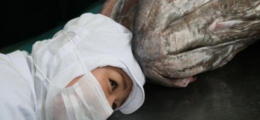 取扱魚種一覧